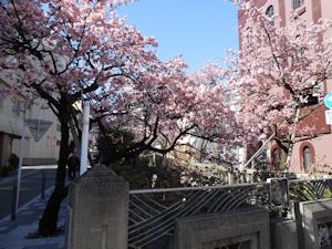 糸川桜まつり03