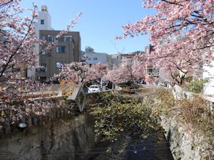 糸川桜まつり02
