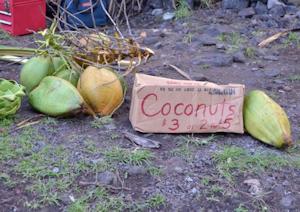 ココナッツ01