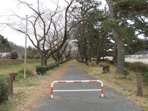 上大島キャンプ場桜エリア