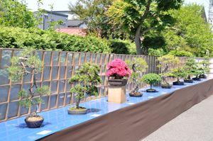 大盆栽祭り02