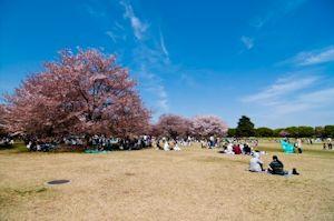昭和記念公園02
