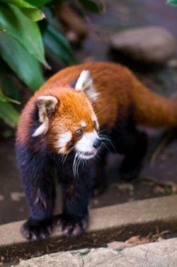 江戸川区自然動物園02 - コピー