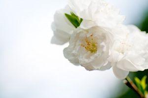 小石川後楽園07 - コピー