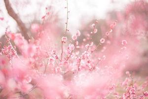 神代植物公園梅まつり04 - コピー
