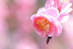 神代植物公園梅まつり02 - コピー