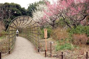 向島百花園梅まつり03 - コピー