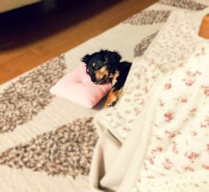 こたつ寝04 - コピー