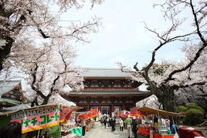 池上本門寺桜まつり02 - コピー