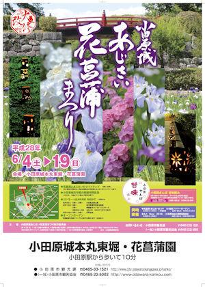 小田原城あじさい花菖蒲まつり02 - コピー
