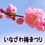 いなざわ梅まつり01 - コピー